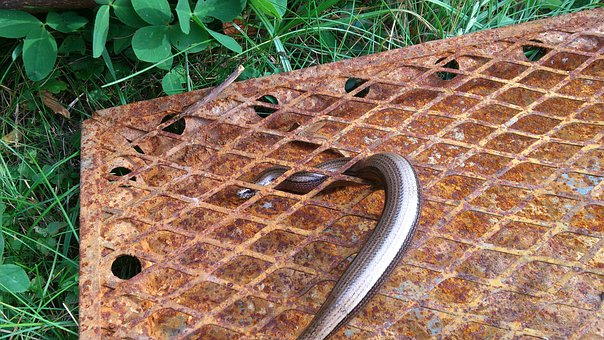 Slow Worm, Lizard, Grid, Stainless, Animal, Reptile