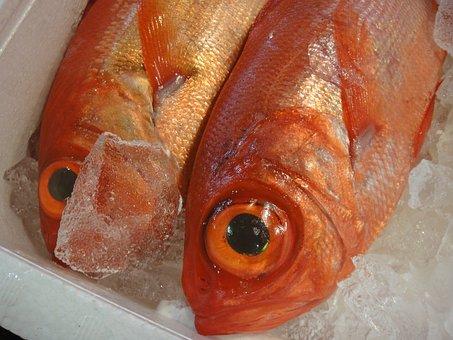 Fish, Market, Japan, Tokyo, Tsukiji, Tourist