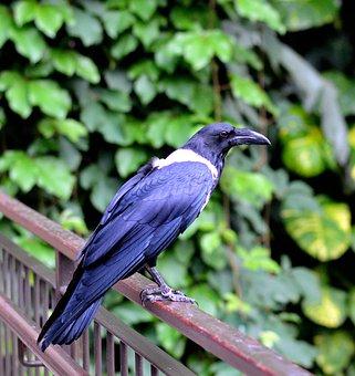 Mynah, Bird, Fly, Wings, Feather, Wildlife, Beak, Wild