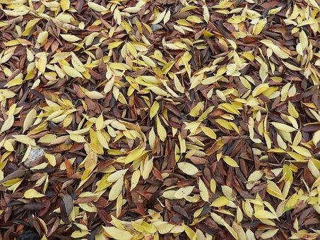 Leaves, Dead Leaves, Falling Leaves, Carpet Leaves