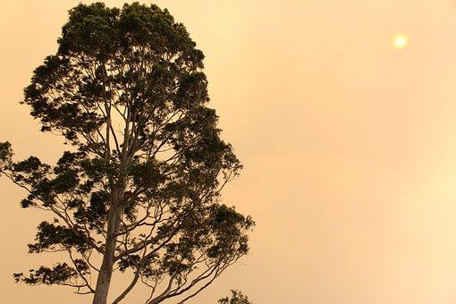 Trees, Orange, Sky, Evening, Dusk, Branches, Leaves