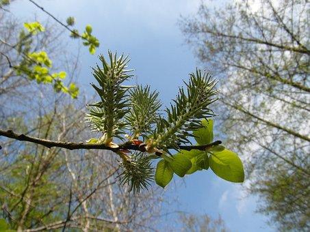 Moor, Blossom, Grow, Inflorescence, Light, Spring, May