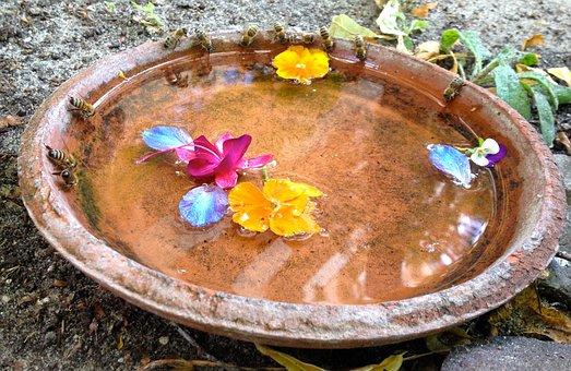 Drinking Bees, Honey-bee, Garden, Summer, Nature
