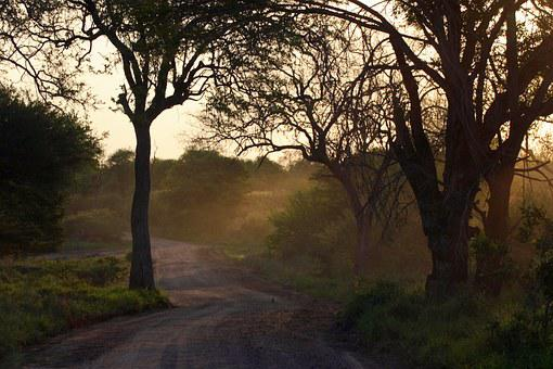 African Bush, Sunset, Landscape, Dirt Road, Trees