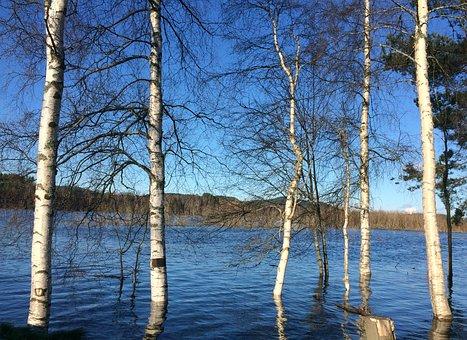 The River Glomma, Water, Flood, Birch, Three