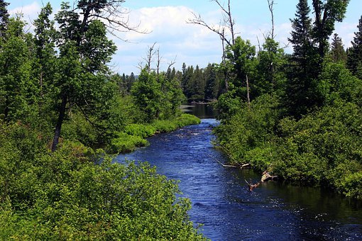Superior National Forest, Usa, Minnesota, Forest