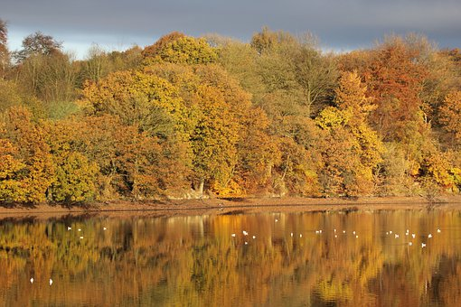 Autumn, Forest, Lake, Water, Reflections, Orange