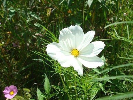 Flower, White Wiesenblume, Wild Flower, Close Up