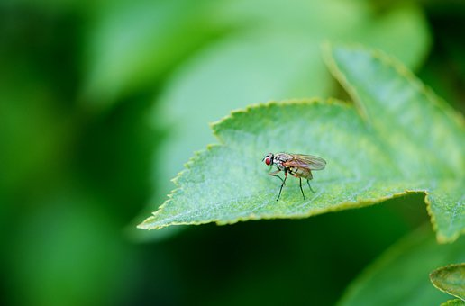 Animal, Tie, Leaf, Leaves, Insect, Insects, Flies