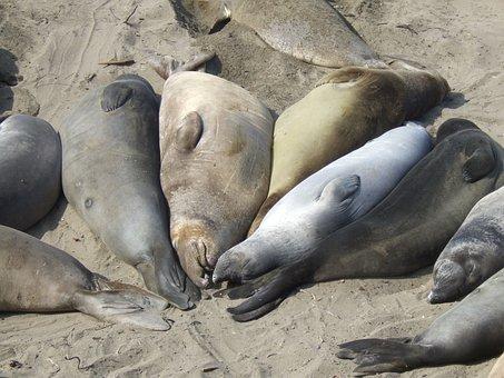 Sea Lions, Highway 1, California