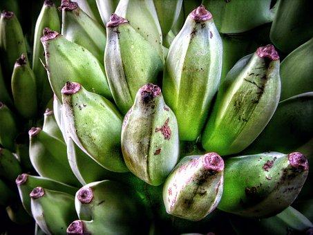 Bananas, Banana, Cau