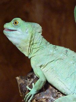 Chameleon, Chamaeleonidae, Reptile, Animal, Blue