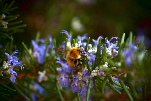 Bee, Nature, Flowers, Nourishment, Prato, Field, Animal