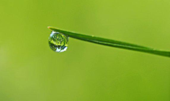 Mirror In A Drop, Grass, Meadow, Mirroring