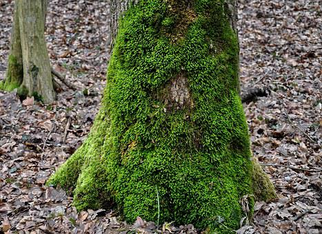 Mossy Tree Trunk, Green Moss, Nature