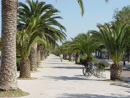 San Benedetto Del Tronto, Promenade, Palm