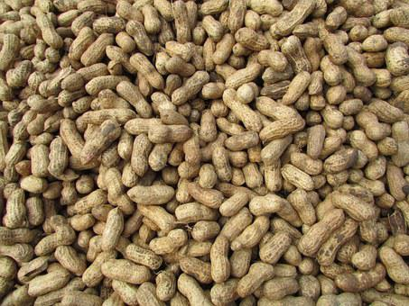 Peanut, Ground Nuts, Bangalore, India