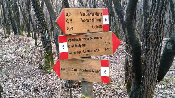 Brianza, Forest, Of Wood, Sign