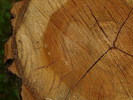 Tree Grates, Tree Stump, Annual Dinner Rings, Bark