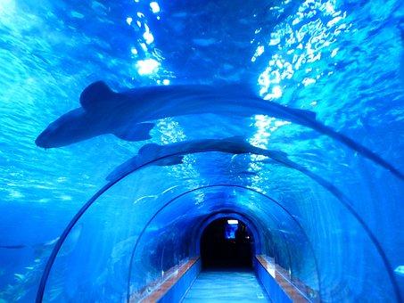 Sharks, Fish, Aquarium, Tunnel, Underwater, Shark Tank