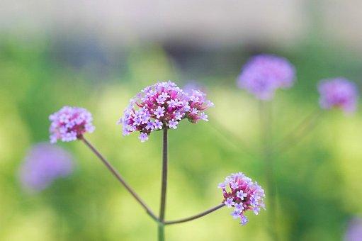 Flower, Nature, Garden, Spring, Summer, Floral, Natural