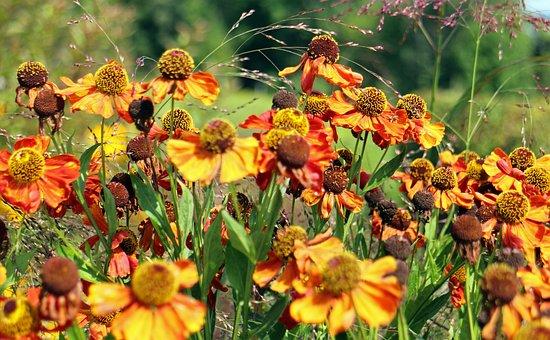 Flowers, Sun Hat, Flower, Yellow, Orange, Bloom, Close
