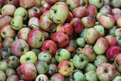 Windfall, Apple, Food, Apfelernte, Steuobst, Nature