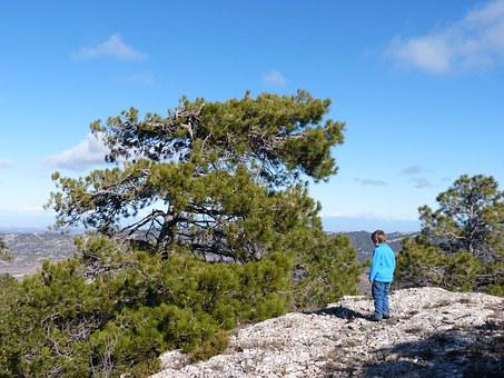 Pine, Modelled By The Wind, Rock, Top, Contemplation