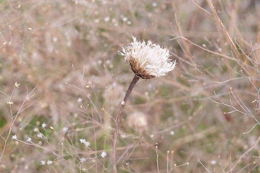 Flower, Wildflower, Nature, Spring, Plant, Petal, Color
