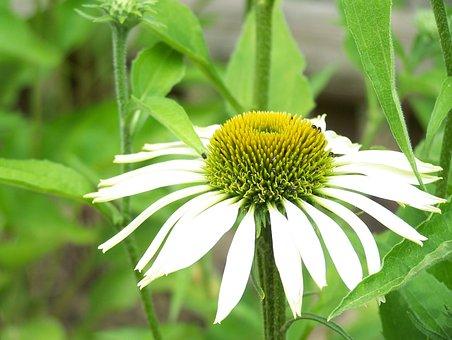 Flower, White, Close, Green, Blossom, Bloom, Plant