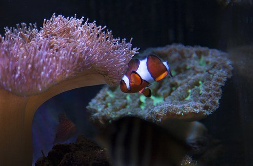 Reef, Tank, Aquarium, Fish, Coral