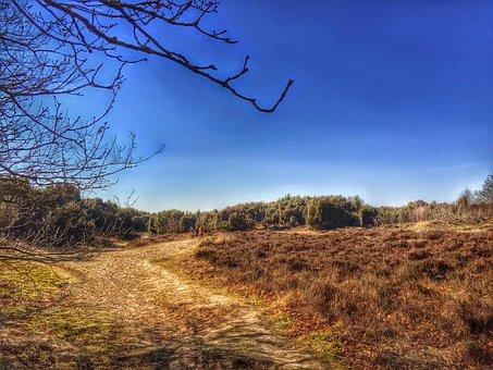 Drenthe, Mantingerveld, Heide