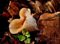 Mushrooms, Fungus, Snow, Green, Winter, Fresh, Nature