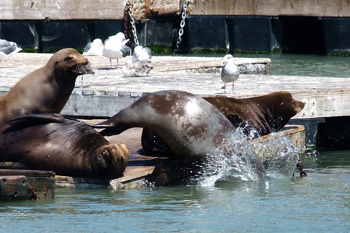 Harbor, Seal, Ocean, Water, Pier, Pacific, Animals