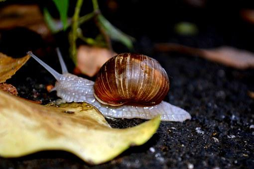 Snail, Shell, My Saturday, Leaf