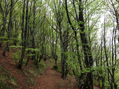 Wood, Nature, Sierracantabria, Euskadi