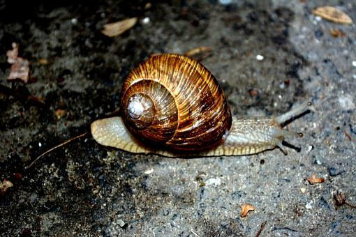 Snail, Shell, My Saturday