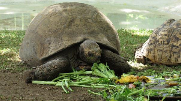 Turtle, Meal, Lunch, Healthy Eating, Food, Animal