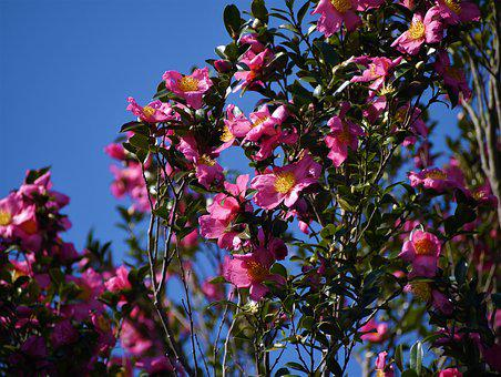 Pink, Flowers, Yellow, Green, Branch, Vein, Late Autumn