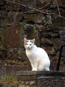 Cat, Wall, White, Animal, Eyes, Green, Sitting, Nature