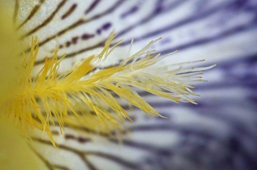 Flower, Nature, Summer, Macro, Pestle