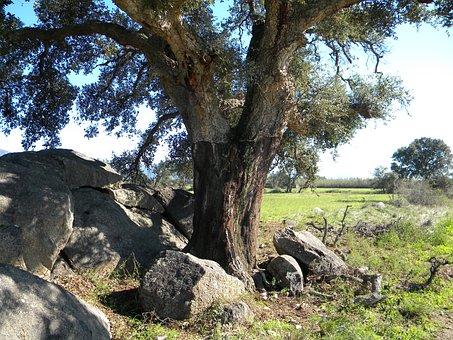 Cork Oak, Aiguamolls, Castelló D' Empúries, Wetlands
