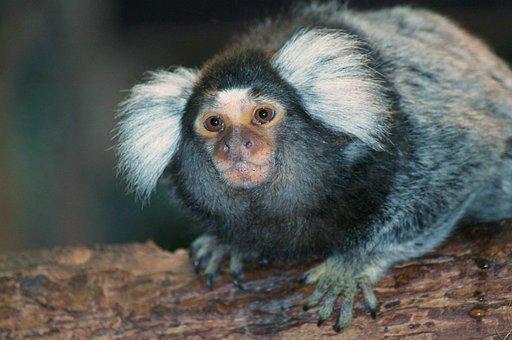 Monkey, Monkey Art, Mammal, Animal, Fauna, Animal World