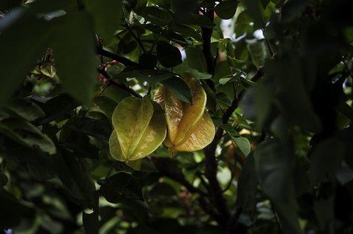 Carom, Fruit, Nature, Frutase, Plants, Fruits