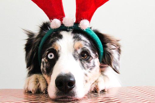 Christmas, Puppy, Dog, Christmasdog, Pet, Animal, Cute