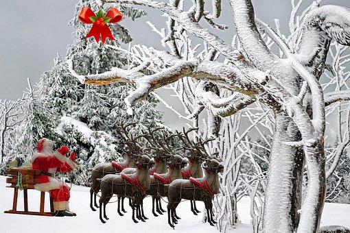 Christmas, Father Christmas, Fir, Beard, Red, Tree