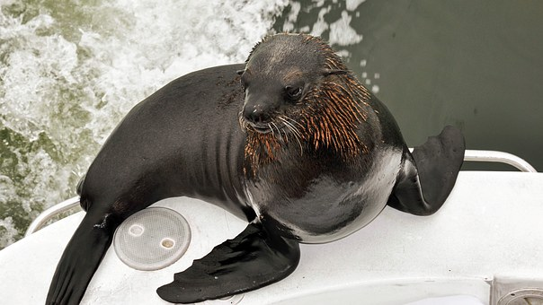 Seal, Nature, Sea, Animal, Beach, Ship