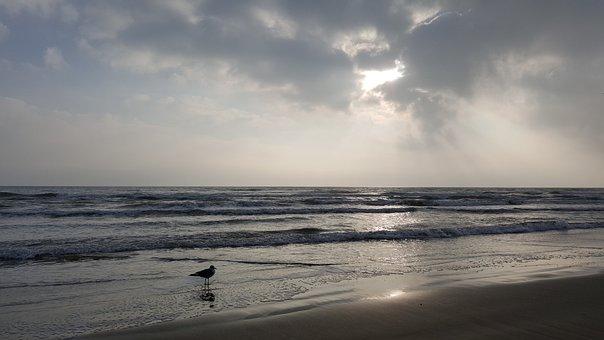 Beach, Bird On A Beach, Seagull On A Beach, Seagull