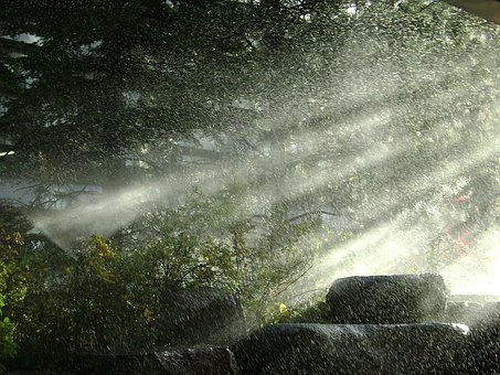 Rain, Spray, Water, Forest, Woods, Landscape, Outdoors