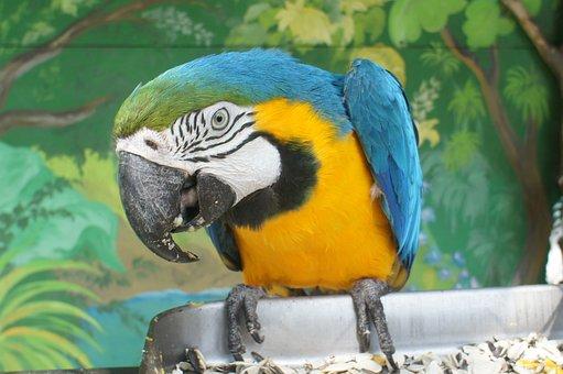 Parrot, Ara, Safari Park Gelendzhik